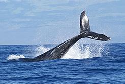亚搏体育APP官网下载鲸祸